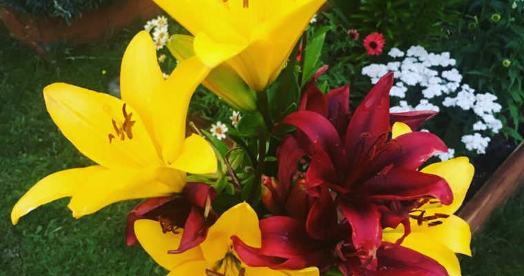Early Summer Bloomers