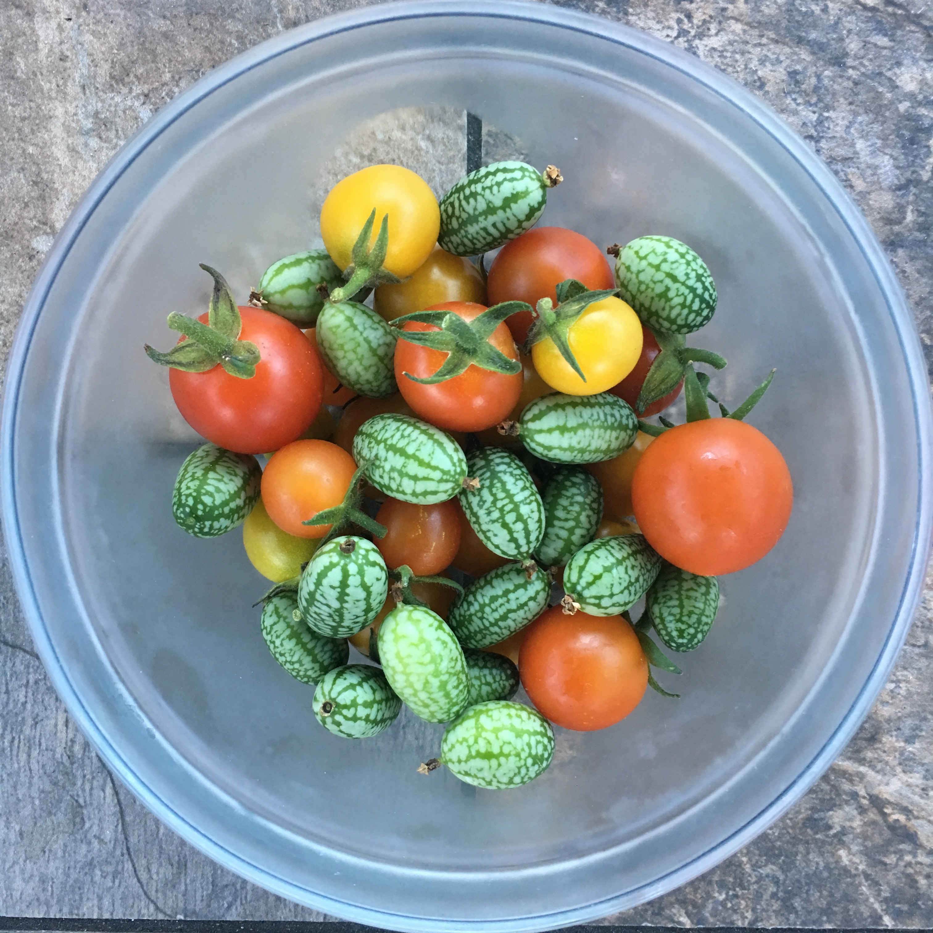 Tomatoes & Cucamelons